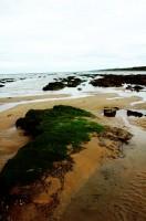 vibrant shore