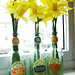 wunderbar daffodils