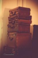 expat baggage goannatree